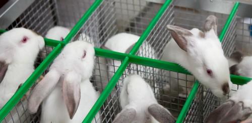 Почему сегодня выгодно разводить кроликов?