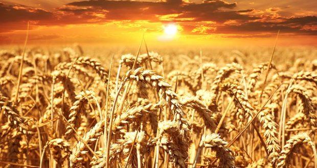 Российский зерновой рынок: ситуация и факторы, влияющие на ценообразование