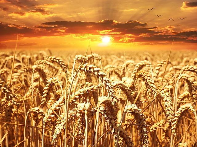 Российский зерновой рынок