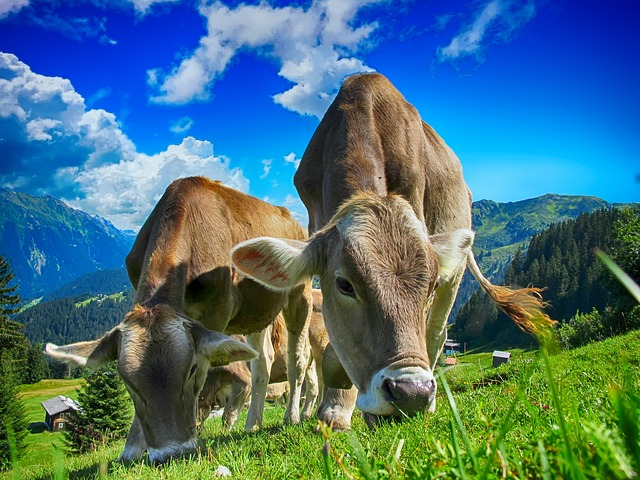 Молочный бизнес, что понадобится и как начать